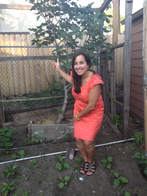 I found my Sicilia in Mr Fazio's garden: un albero di fichi siciliani!!! a Sicilian fig tree!!!